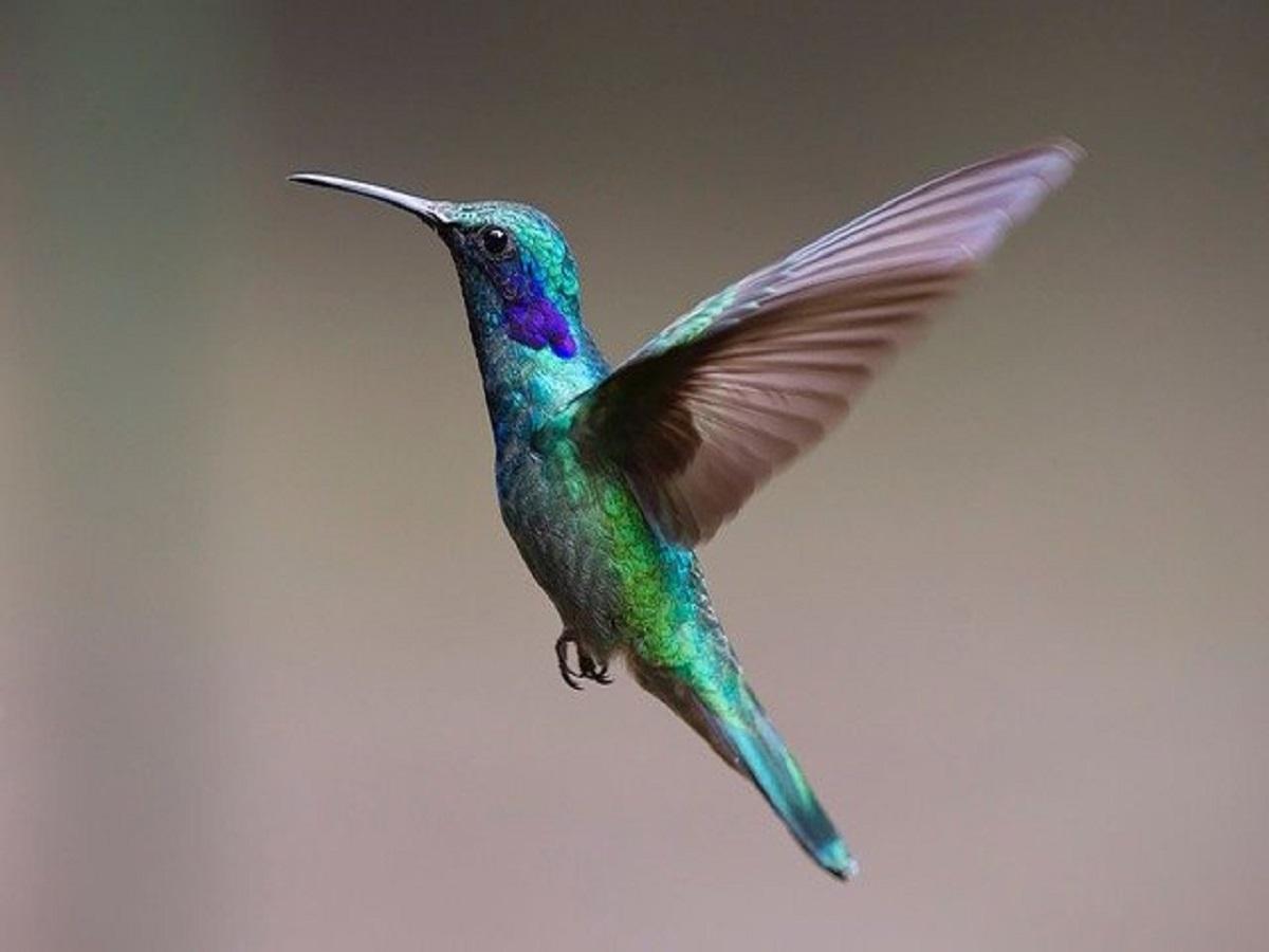 hummingbird-2139279_640