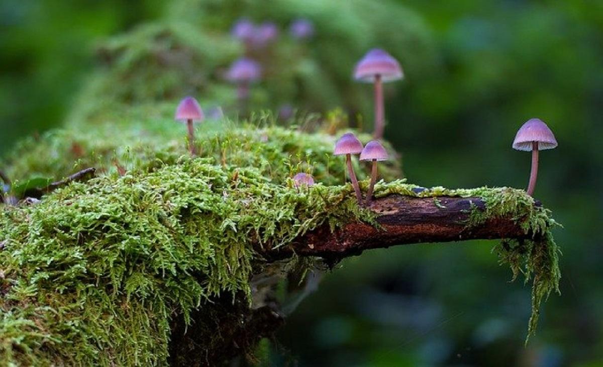 mushroom-2786789_640