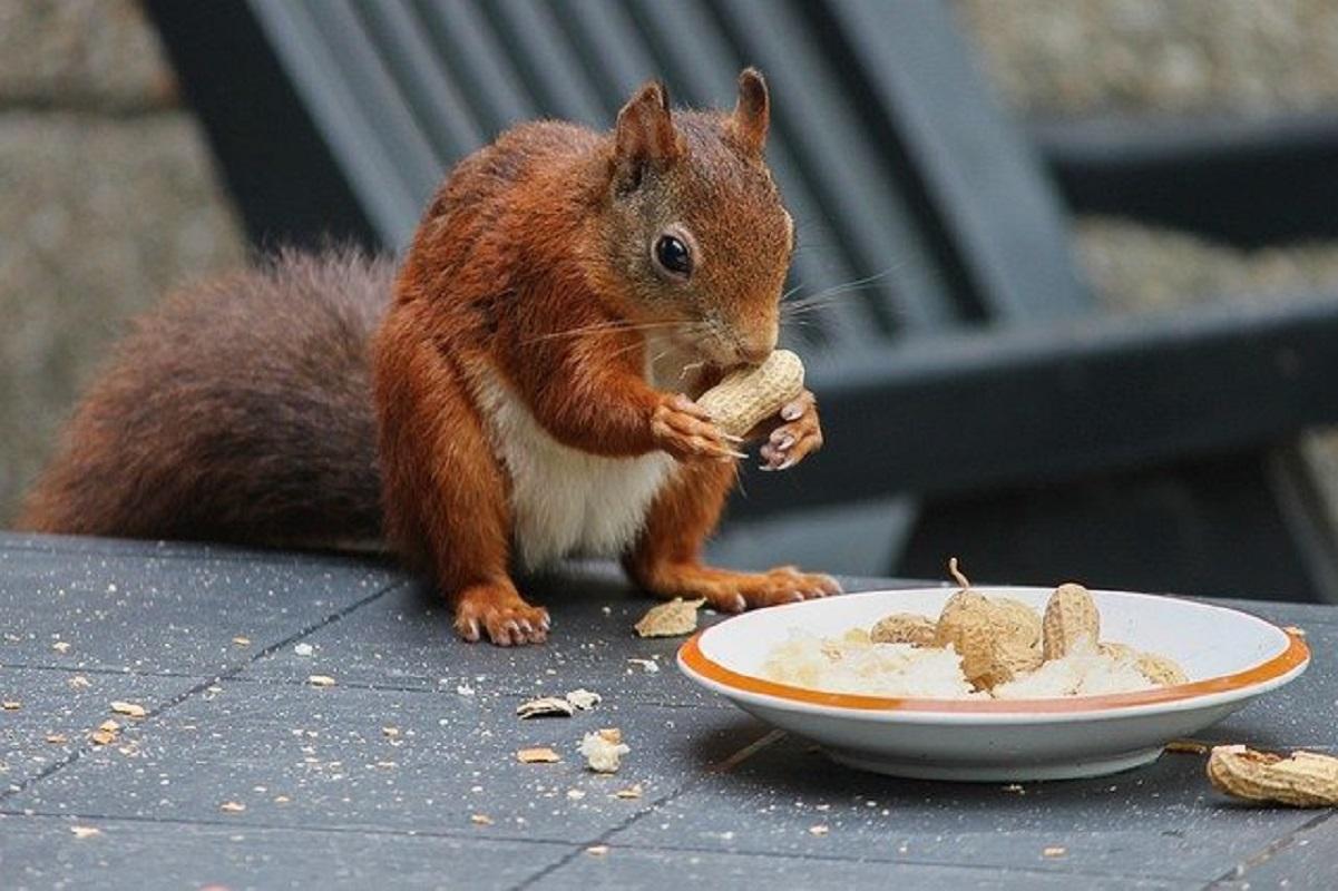 squirrel-4555087_640