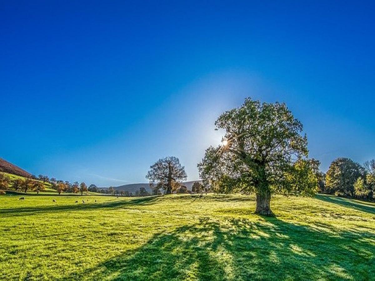 tree-2916763_640