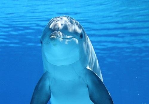 dolphin-203875_640-1
